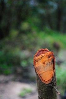 A shot in a Private Estate near Munnar