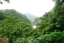 A Stream near Munnar