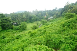 View along a road from Cochin to Munnar