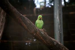 Parrot, Guindy National Park, Chennai