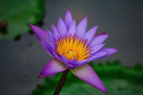 Random flower shot near Munnar