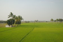 A farm along the road side near Kanchipuram