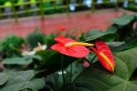 Flower Park, Munnar