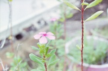 Pink flower and green leaves