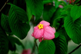 Flower Park - Munnar