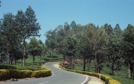 Road to Aliyar from Valparai