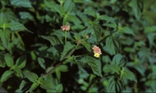 Small flower with leaves