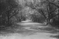 Road from ECR to Vedanthangal