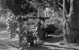 Tender Coconut Shop near Pollachi